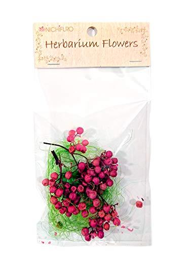 ニチフロ(Nichiflro) ハーバリウム用花材 ペッパーベリー ピンク