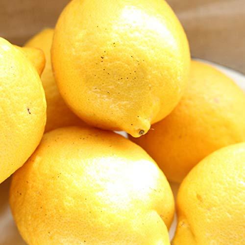 レモン 1kg サイズ混合 露地 家庭用 風スレ 色ムラ有 愛媛県産