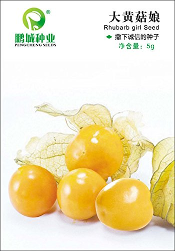 Semences de la fruits ruibarbo Graines de fruits Grand Champignon Niang lanternes de jus de fruits plus que le set du couleur original de 5 g