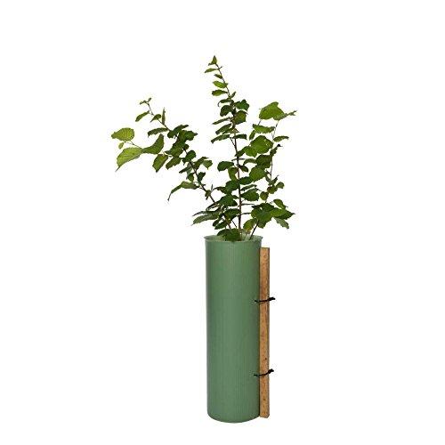 5er Paket Wuchshülle als Pflanzenschutz