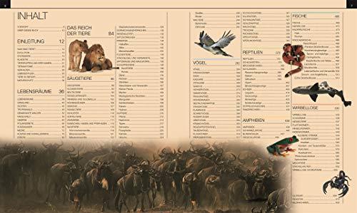 Tiere: Die große Bild-Enzyklopädie mit über 2.000 Arten - 3