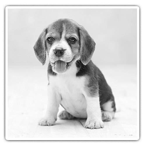 Juego de 2 pegatinas cuadradas de 10 cm BW – Lindo Beagle cachorro animal 42535