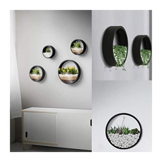 ZEETOON 3 Pack Set Modern Wall Planters Succulent Planter Circle Metal Flower Pot Indoor Air Plant Vertical Container Hanging Vase Home Decoration Size S,M,L Black, with 3 Artificial Succulent Plants 2 MATERIAL: Stabilized iron alloy metal with powder coating ensures long lasting color and withstands extreme weather conditions. Tempered and limpid glass feasts your eyes, add visual intrigue to this wall hanging. Do not rust and no unpleasant smell. PLANTS: Great for succulent plants, air plant, mini cactus, faux plants, artificial plant. It also works for mint, herbs, basil, ivy, flowers, climbing plants, evergreens. The possibilities are only limited by your imagination; display them in a wall hook plant holder, a wall mount, a geometric glass vase, or even in a live wreath. They can even make the perfect desk centerpiece for your office. IDEAL: ZEETOON Wall Vase Perfect for displaying your favorite hanging plants, this wall holder is a basic piece that will fit perfectly anywhere. Outdoor or indoor, kitchen, bedroom, great garden shed decor, farmhouse style wall decor, front entry way, or mounting on bathroom.