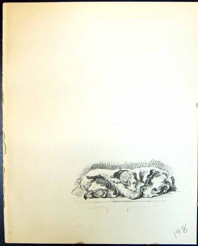 Impresión 1936 de la Antigüedad de Lucy Dawson de los Animales de los Perros Caseros de los Perritos de Terrier