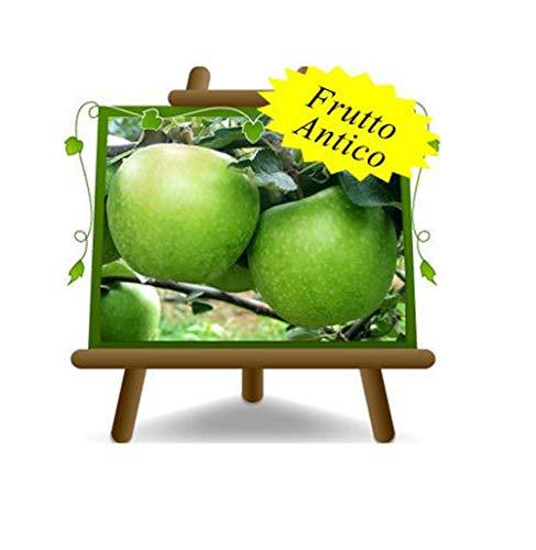 Apfelbaum Äpfel Früchte - Granny Smith - Obstpflanzen antik auf Blumentopf einer Vase von 26 - Baum max 200 cm – 4 Jahre Anbau Italien