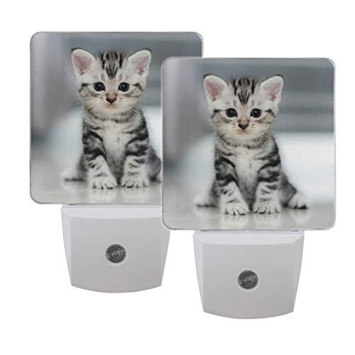 Naanle Set of 2 Grey Kitten Cat in Dark Glowing Eyes On Floor Auto Sensor LED Dusk to Dawn Night Light Plug in Indoor for Adults