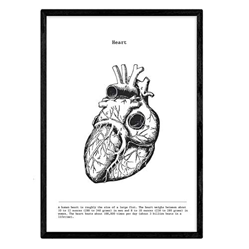 Nacnic Anatomie Poster. Vintage Stil Wanddekoration Abbildung von Herz, Muskeln und Knochen. Verschiedene menschliche Körper, Biologie und Medizin Bilder ohne Rahmen. Größe A3.
