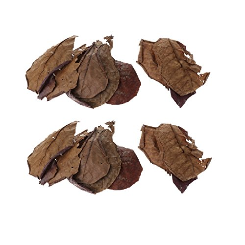Homyl Paquete de 20 hojas de catappa de almendra india con pH inferior para acuarios y peceras