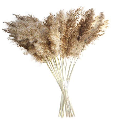 eiuEQIU 30/50 pieces pampas grass dried decoration, dried flowers vases dried flowers 60 cm, bouquet boho decoration bedroom living room balcony bathroom room table decoration wedding - -