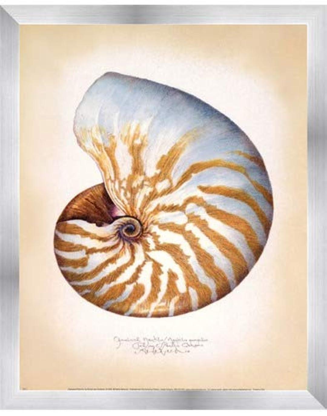 巻き取り意気揚々うそつきChambered Nautilus by Richard Van Genderen?–?11?x 14インチ?–?アートプリントポスター 11 x 14 Inch LE_646861-F9935-11x14