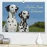 Auf den Punkt - Dalmatiner(Premium, hochwertiger DIN A2 Wandkalender 2020, Kunstdruck in Hochglanz): Dalmatiner auf 13 wunderschönen Fotos für Sie ... (Monatskalender, 14 Seiten ) (CALVENDO Tiere)