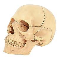 ミニチュア人間の頭蓋骨モデル、15部のミニ人間の頭蓋骨モデル、取り外し可能な人間の頭蓋骨の頭の解剖学モデル、ハロウィーンの装飾のための医療解剖学モデル(5.75 * 4.01 * 3.43インチ)