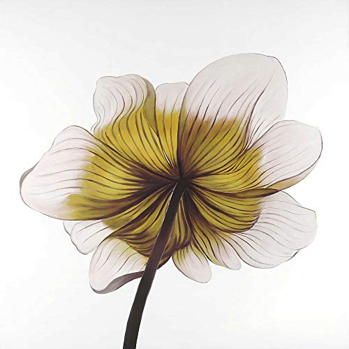 New BEGIN DECO MAISON - HOME DECOR 2080-2424-FL195-2 Beautiful Anemone Yellow Flower, Fine Art Galle...