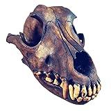 LUCKFY Real Wolf Skull Genuine Taxidermy Animal Bones Animal Skull Model for Bar Home Decoration Art Collection Veterinary Teaching Tool