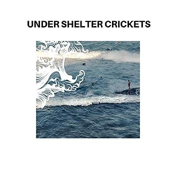 Under shelter Crickets