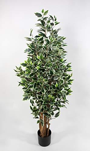 Seidenblumen Roß Ficus Nitida 150cm grün-weiß LA Kunstbaum Dekobaum Kunstpflanzen künstlicher Baum Pflanzen