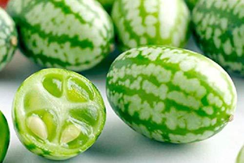 きゅうりメロンの種(50粒)