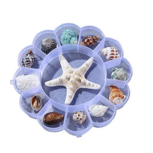 DRINK Material de concha, feito à mão, espécime de estrela-do-mar, caixa de presente infantil ciência de biologia marinha presente de jardim de infância