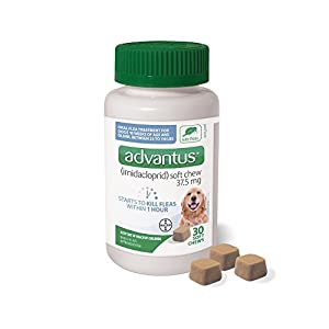 Advantus (Imidacloprid) 30-Count Chewable Flea Treatment for Large Dogs, 23-110 Pounds