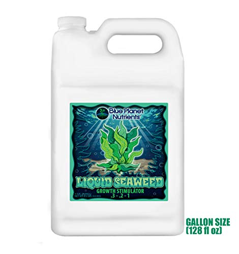 Blue Planet Nutrients Liquid Seaweed Gallon (128 oz) | Liquid Kelp Supplement | Hydroponic Aeroponic Soil Coco Coir | for All Plants & Gardens