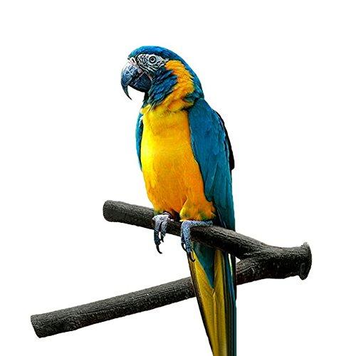 Perchoir-lime en bois brut, jouet pour oiseaux tels que les perroquets gris du Gabon, les aras, les calopsittes élégantes, les amazones, les cacatoès, les perruches inséparables et les pinsons, support en forme de fourche jouet pour cage d'oiseau
