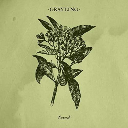 Grayling