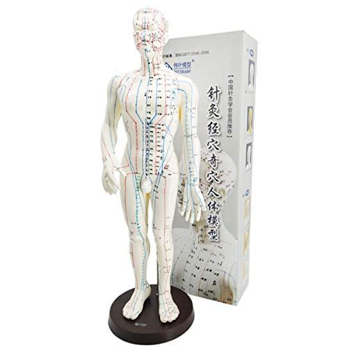 SHUAI Uomo Donna Agopuntura Modello Umano, Punto di Massaggio Istruzione Strumento Didattico Spiegazione Comunicazione Medico-Paziente Exhibition Hall 50Cm / 48Cm,B