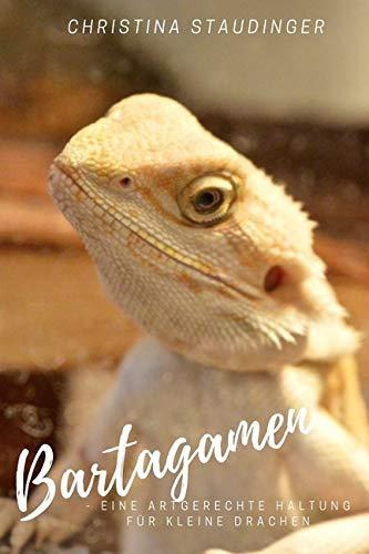 Bartagamen - eine artgerechte Haltung für kleine Drachen