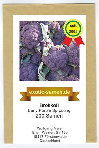Brokkoli - Broccoli - für Winter- und Frühjahrsernte - Early Purple Sprouting - 200 Samen