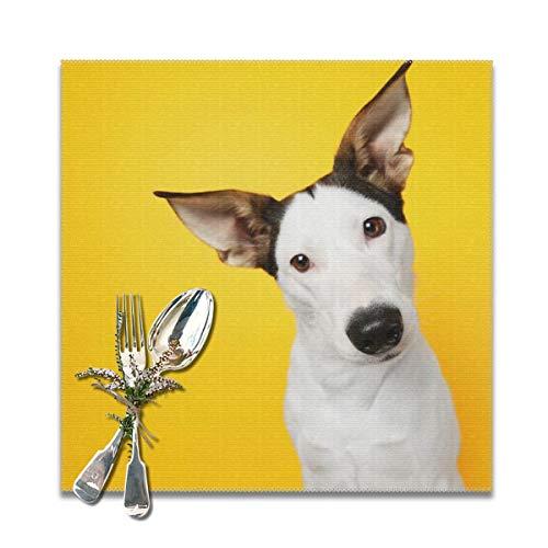 JOJOshop Juego de 6 manteles individuales de ratonero para mesa, resistente al calor, 30,5 x 30,5 cm, para mesa de comedor