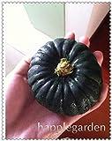SANHOC 20 pz Zucca Decorativa Bonsai Heirloom di Verdure Bonsai Home Grown Cucurbita Pepo Turco Turbante Zucca Bonsai Giardino delle Piante: 2