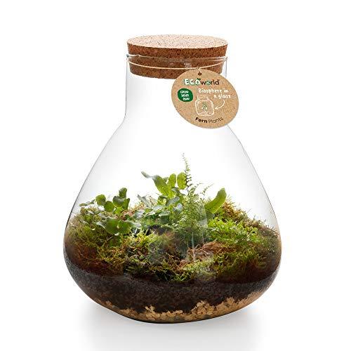 Ecoworld Jungle Biosphere Ecosysteem Plant - Piramide Glas XL - Ø 30 cm ? 36 cm
