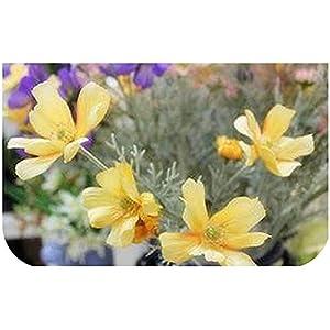 Silk Flower Arrangements GzxLaY Artificial Scenery Cosmos High Grade Simulation Daisy Flowers Fake Plants Home Shop Decor,Yellow Green,Size:One Size,Color:Yellow Green (Color : Orange, Size : One Size)