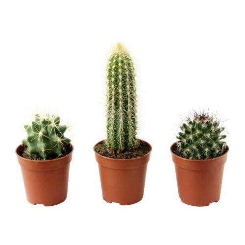 ★CACTACEAE 鉢植え / サボテン / 3 ピース[イケア]IKEA(36804586)