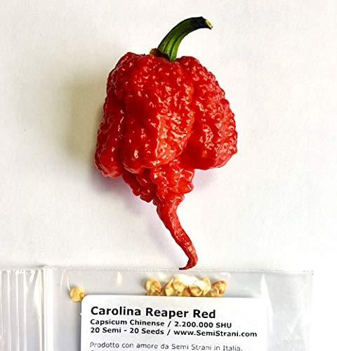 20 Graines Pures De Carolina Reaper Red, Le Piment Chili Le Plus Piquant Du Monde