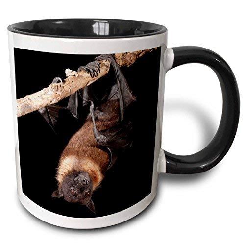 Queen54ferna Usa, Pennsylvania Riesige Fruit Bat-Us39 Jmc0093-Joe and Mary Ann McDonald Tasse, 312 ml