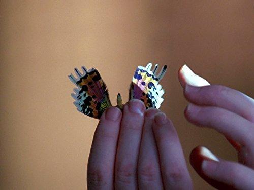 Schmetterlinge im Kopf
