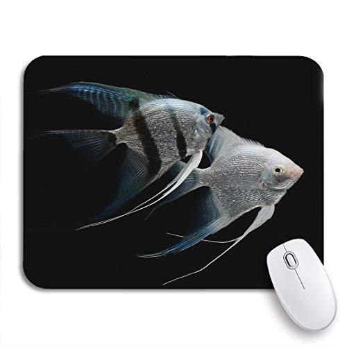 Gaming Mouse Pad Silber Angelfish Angel Fisch Süßwasser Aquarium Schwarz Skalar Tier rutschfest Gummi Backing Mousepad für Notebooks Computer Maus Matten