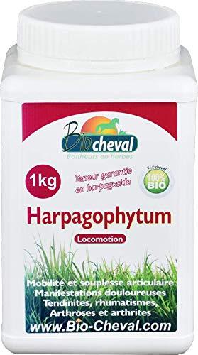 Harpagophytum Bio 1 Kg