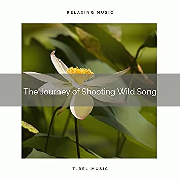 ! ! ! ! ! The Journey of Soothing Wild Song