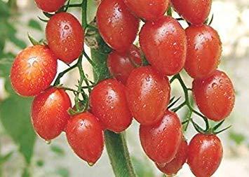 VISA STORE 100pcs Rare Tomate sät Bonsai Bio-Gemüse und Obst Pflanzensamen, Topf Samen für Heim & Garten Gewächshaus Ernte: 6