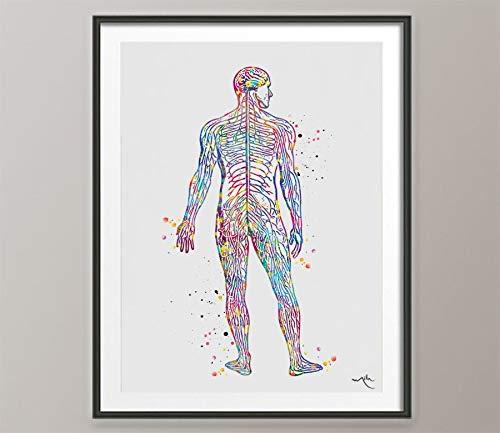 Sistema nervioso con impresión de acuarela sistema circulat