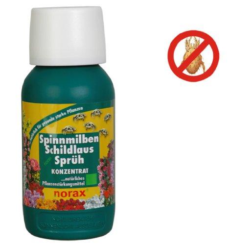 Spinnmilben Schildlaus Schutz