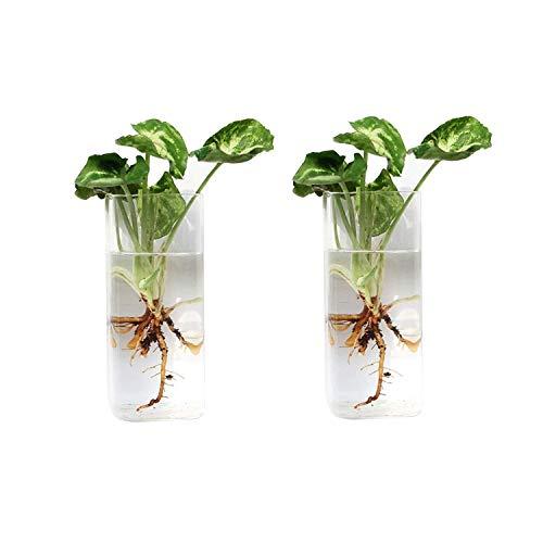 Cratone 2 Stücke Glas Wandvase Pflanzgefäße zum Aufhängen, Blumentopf Glaskugeln Terrarium für Hydrokultur Topfpflanzen,Hause Wohnzimmerwand deko
