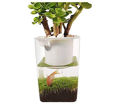 Aquarium Fish Tank - Vis Groenten Symbiotische Tank Transparant Groeit Planten Lui Ecologisch Aquarium Ocean Goldfish Bowl Ecosysteem Hydrocultuur Tuin