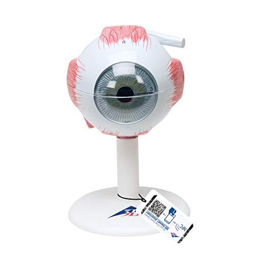 3B Scientific Menschliche Anatomie - Modell - Auge, 3-fache Größe, 6-teilig + kostenloser Anatomiesoftware - 3B Smart Anatomy