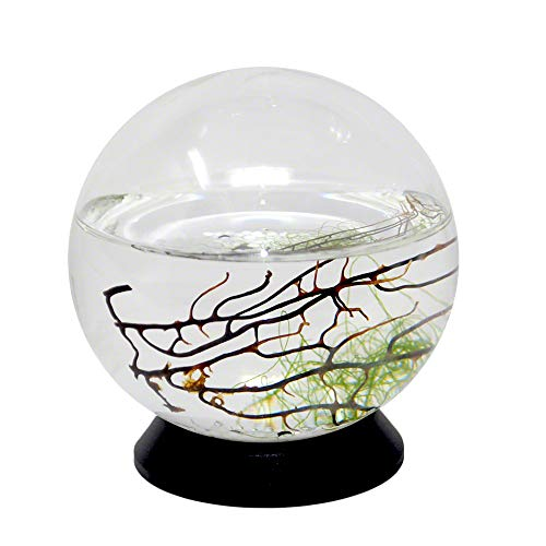 EcoSphere Closed Aquatic Ecosystem, Small Sphere, with Turntable Base