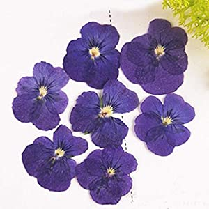 Silk Flower Arrangements Artificial and Dried Flower Pansy DIY Handmade Material Dried Pressed Flowers True Plant Specimens 120 Pcs - ( Color: Style 3 )