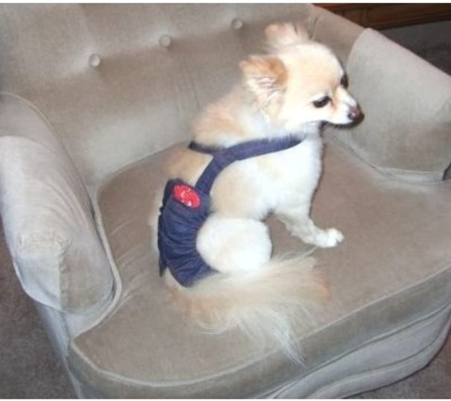 Joybies Durable Piddle Pants for Male Dog (Measuring 11 13  from Collar to Base of Tail) X Small denim
