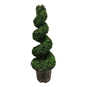 AMERIQUE Gorgeous 4 Feet Wide And Dense Boxwood Spiral Topiary Artifical Tree Silk Plant with UV Protection Indoor And Outdoor, With Decorative Pot, Feel Real Technology, Super Quality